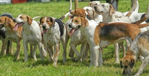 Western Hounds today